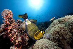 Free Ocean, Coral And Fish Stock Image - 12755181