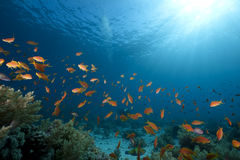 Free Ocean, Coral And Fish Royalty Free Stock Image - 12871296