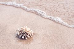 Ocean coral on the sand of tropical beach Stock Images