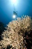 Ocean, coral and a diver Stock Photos