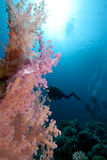 Ocean,coral and divers Stock Images