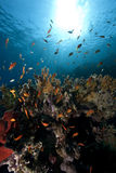Ocean, coral and fish. Taken in the red sea Stock Photos