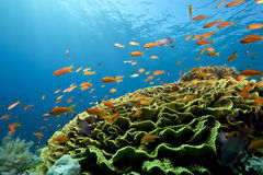 Ocean, coral and fish Royalty Free Stock Image