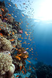 Ocean,coral and fish. Taken in the red sea Royalty Free Stock Photos