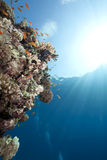 Ocean,coral and fish Royalty Free Stock Photo