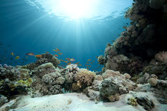 Ocean,coral and fish Royalty Free Stock Image