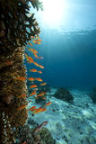 Ocean,coral and fish. Taken in the red sea Royalty Free Stock Image