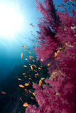 Ocean,coral and fish Stock Photography