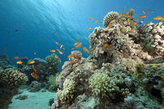 Ocean, coral and fish Royalty Free Stock Photo