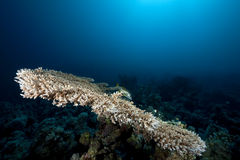 Ocean, coral and fish. Taken in the Red Sea Royalty Free Stock Photo