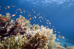 Ocean, coral and fish Stock Image