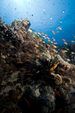 Ocean, coral and fish. Stock Photography