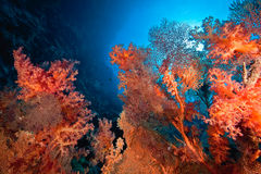 Ocean, coral and fish Stock Images