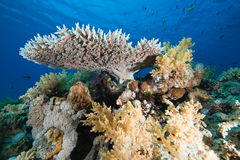 Ocean, coral and fish Stock Photos