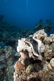 Ocean, coral and giant clam Royalty Free Stock Photos