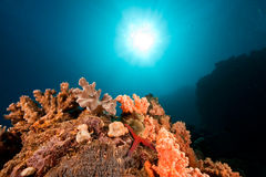 Ocean, coral and sun Royalty Free Stock Photography