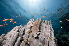 Ocean, coral and sun. Taken in the red sea Royalty Free Stock Photos