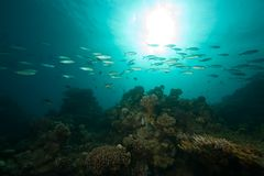 Ocean, coral, sun and fish Royalty Free Stock Photography