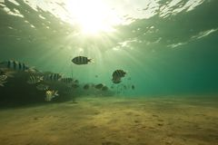 Ocean, coral, sun and fish Stock Image