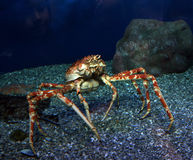 Ocean crab royalty free stock photo