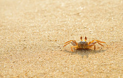 Ocean crab Royalty Free Stock Photography