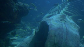 Ocean Creatures View. Fish swimming near a big whale skeleton, among light rays on beautiful blue waters stock footage