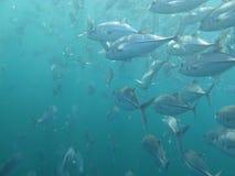 Ocean diving. Ocean scuba diving (underwater photo Stock Photo