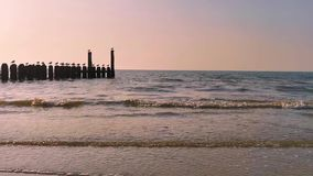 The ocean of domburg during sunset, wooden wave breaker poles with seagulls, Dutch beach scenery, nature background video. The ocean of domburg during sunset stock footage