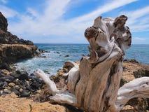 Ocean driftwood Royalty Free Stock Image