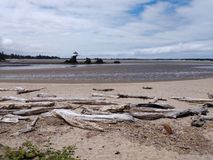 Ocean Driftwood at an Oregon Oceanside with a beach royalty free stock image