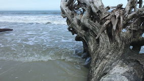 Ocean and driftwood Stock Photography