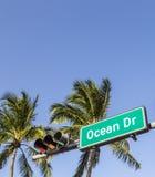 Ocean Drive Street Sign in Miami Beach Royalty Free Stock Photos