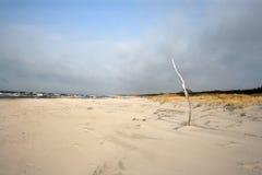 Ocean dunes Stock Photography