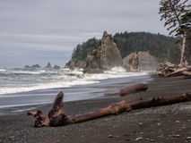 Ocean encroaching on forest Stock Photography