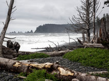 Ocean encroaching on forest. Rising ocean encroaches on the forest leaving dead trees and stumps on the beach in Olympic National Park, Washington Stock Photos