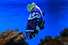 Ocean exotic fish Stock Photos
