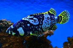 Ocean exotic fish Stock Image