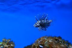 Ocean exotic fish stock image