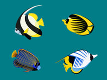 Ocean exotic fish set. Underwater red sea collection. Vector flat illustration sea color tropical various aquarium fish icon Royalty Free Stock Image