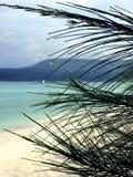 Ocean, fale, palmy, zmierzch palmy Kambodża zdjęcia royalty free