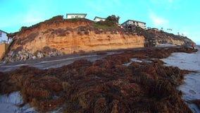 Ocean falez blasku księżyca gałęzatka i plaża zbiory wideo