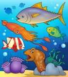 Ocean fauna topic image 4 Royalty Free Stock Images