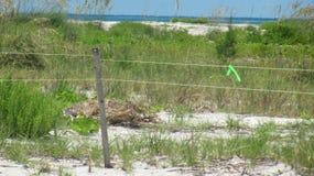 Ocean Fences Cayo Costa State Park. Florida royalty free stock photos