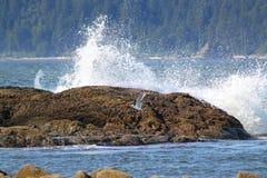 ocean figlarnie Zdjęcia Royalty Free