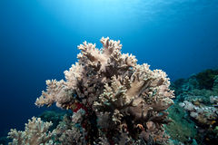 Ocean and finger leather coral. Taken in the red sea stock images