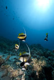 Ocean and fish Stock Images
