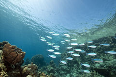 Ocean and fish Royalty Free Stock Image