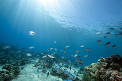 Ocean and fish Royalty Free Stock Photography