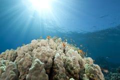 Ocean and fish Stock Photo