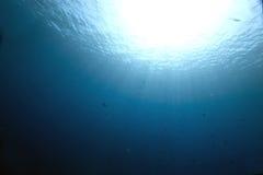 Ocean and fish stock image